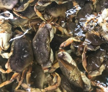 加拿大黃金蟹